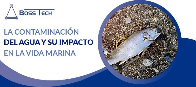 La Contaminación Del Agua Y Su Impacto En La Vida Marina