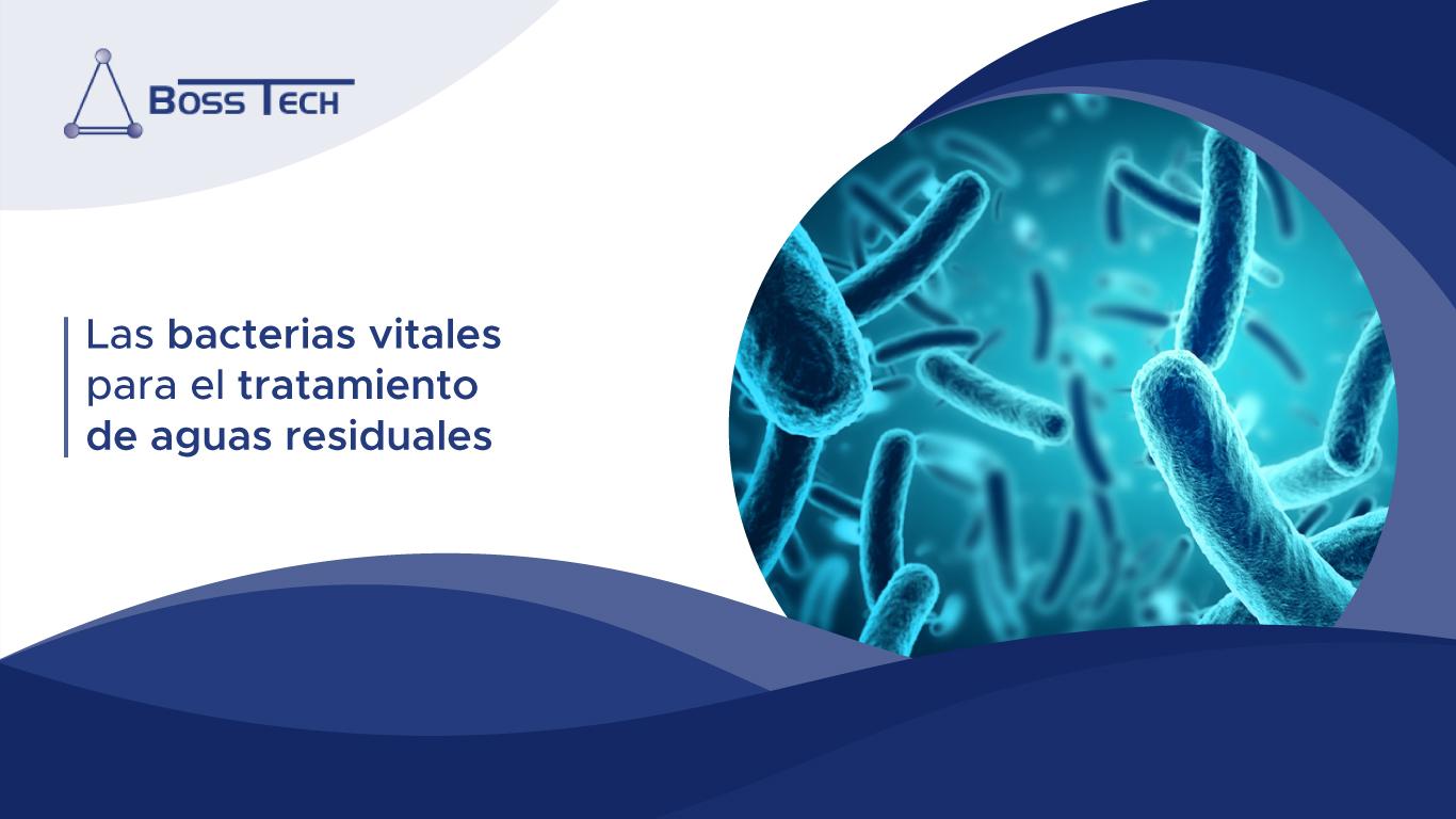 Las Bacterias Vitales Para El Tratamiento De Aguas Residuales